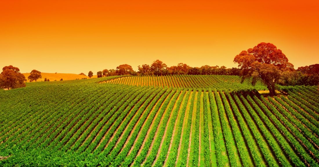 Supporting tourism businesses in South Australia